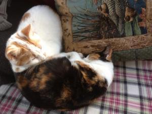 sleep kittens cuddling up