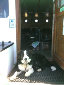 puppy leaving cape clear on ferry