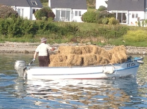 summertime in rural west cork