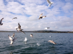 seagulls and fishing