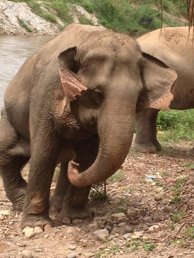 elephant conservation thailand