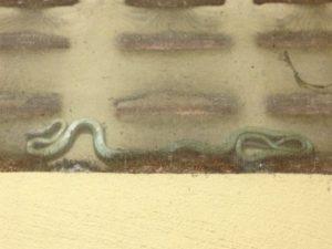 thailand snakes