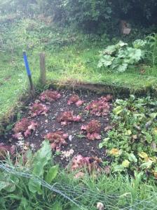 gardening ireland